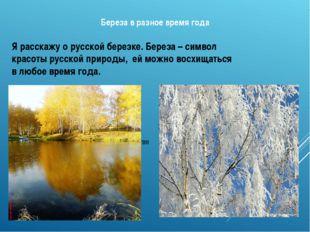 Береза в разное время года Зимой – сверкающая в ажурном инее Осенью в золото