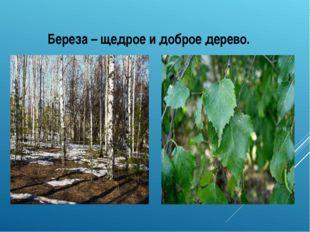 Летом – длиннокосая, кудрявая Весной - ослепительно белая на фоне зеленой тр