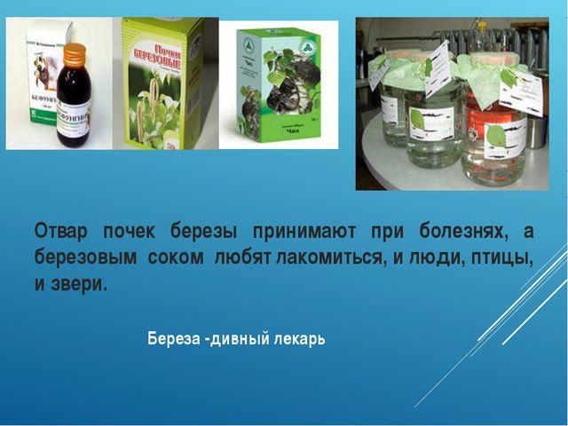 Береза -дивный лекарь Отвар почек березы принимают при болезнях, а березовым...