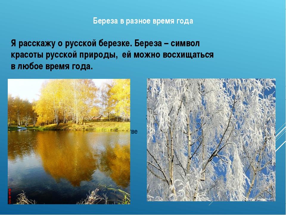 Береза в разное время года Зимой – сверкающая в ажурном инее Осенью в золото...