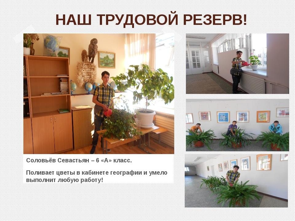 НАШ ТРУДОВОЙ РЕЗЕРВ! Соловьёв Севастьян – 6 «А» класс. Поливает цветы в кабин...