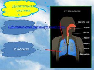Дыхательная система 1.Дыхательные (воздухоносные) пути 2.Легкие.