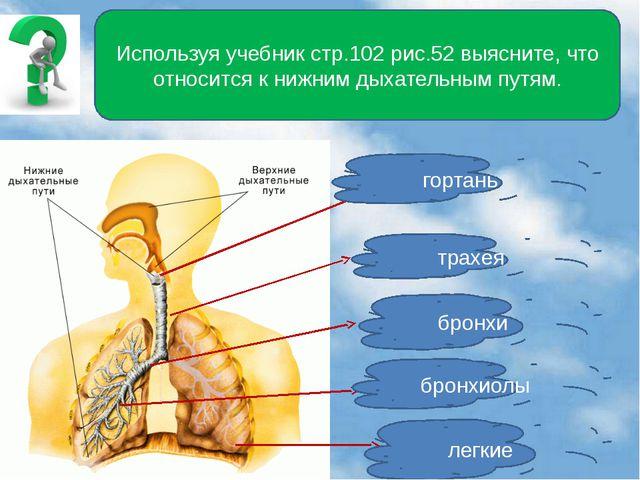 Используя учебник стр.102 рис.52 выясните, что относится к нижним дыхательны...
