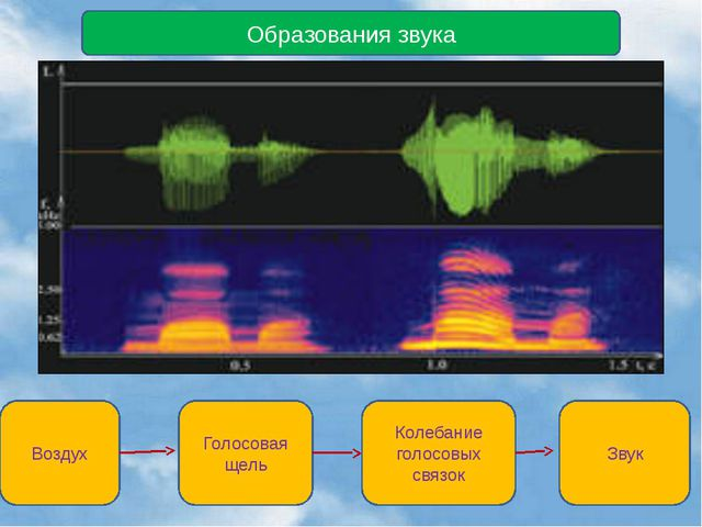 Образования звука Воздух Голосовая щель Колебание голосовых связок Звук