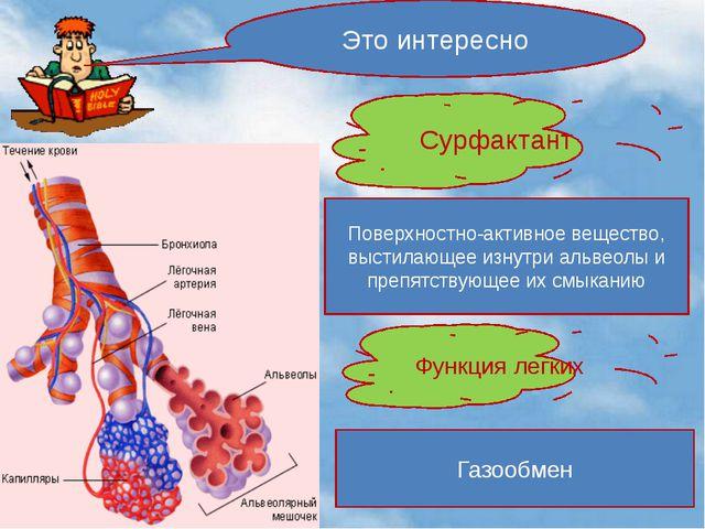 Это интересно Сурфактант Поверхностно-активное вещество, выстилающее изнутри...