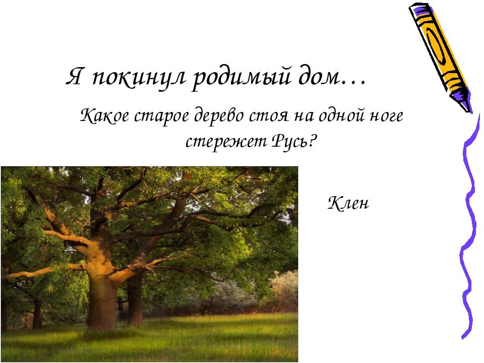 Я покинул родимый дом… Какое старое дерево стоя на одной ноге стережет Русь?...
