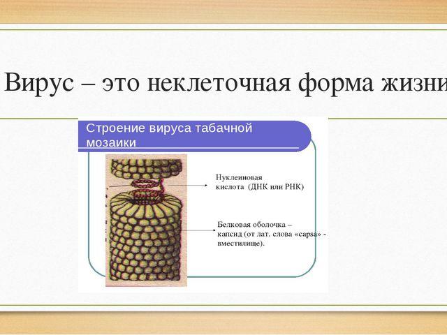 Вирус – это неклеточная форма жизни