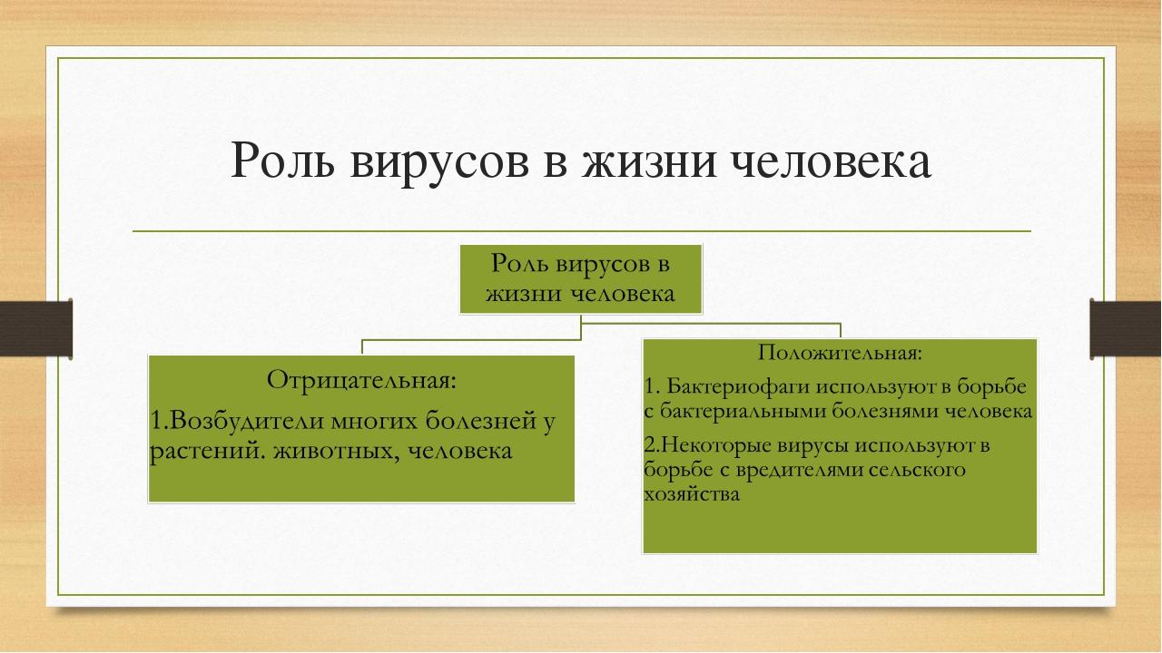 Роль вирусов в жизни человека