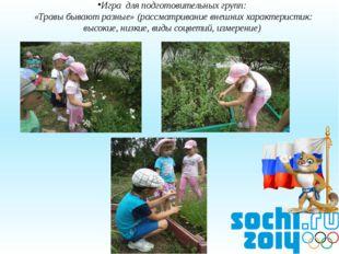 Игра для подготовительных групп: «Травы бывают разные» (рассматривание внешни