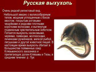 Русская выхухоль Очень редкий реликтовый вид. Небольшой зверек с валикообразн