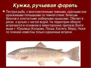 Кумжа, ручьевая форель Пестрая рыба, с многочисленными темными, красными или