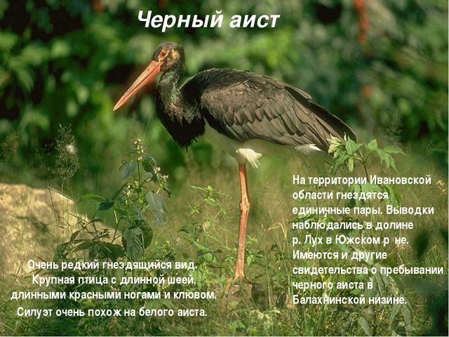 Черный аист Очень редкий гнездящийся вид. Крупная птица с длинной шеей, длинн...