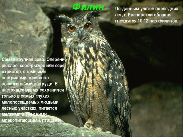 Филин Самая крупная сова. Оперение рыхлое, серо-рыжее или серо-охристое, с те...