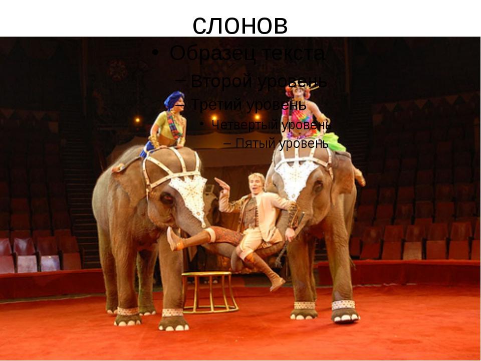 слонов