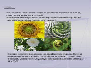 Золотое сечение в природе