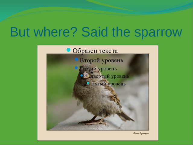 But where? Said the sparrow