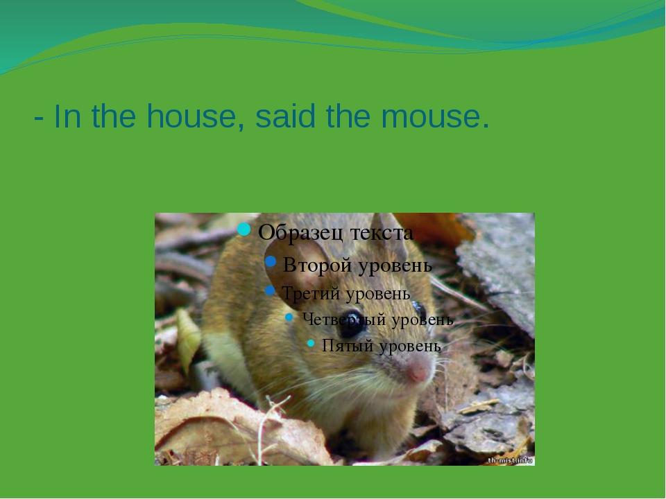 - In the house, said the mouse.