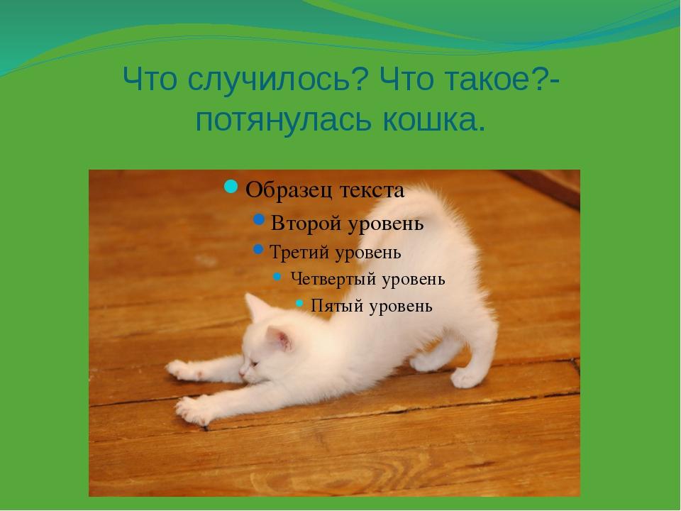 Что случилось? Что такое?- потянулась кошка.