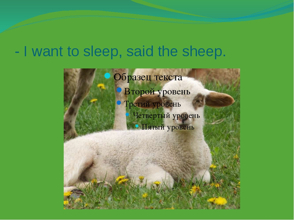 - I want to sleep, said the sheep.