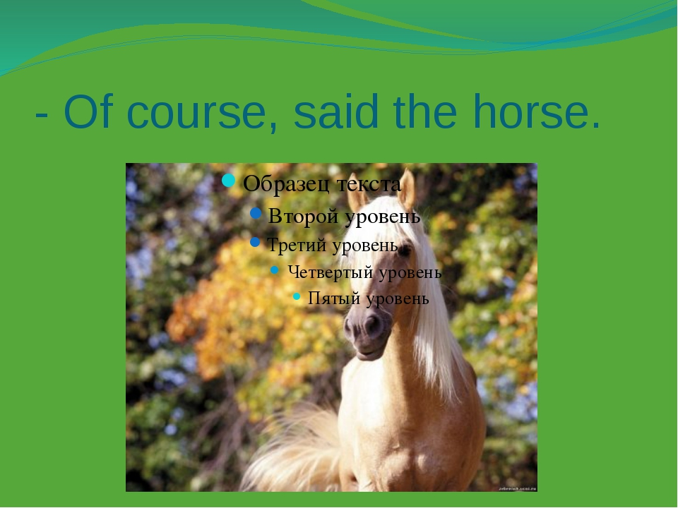 - Of course, said the horse.