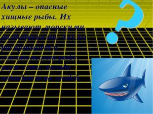 Акулы – опасные хищные рыбы. Их называют морскими разбойниками. Акулы распуги