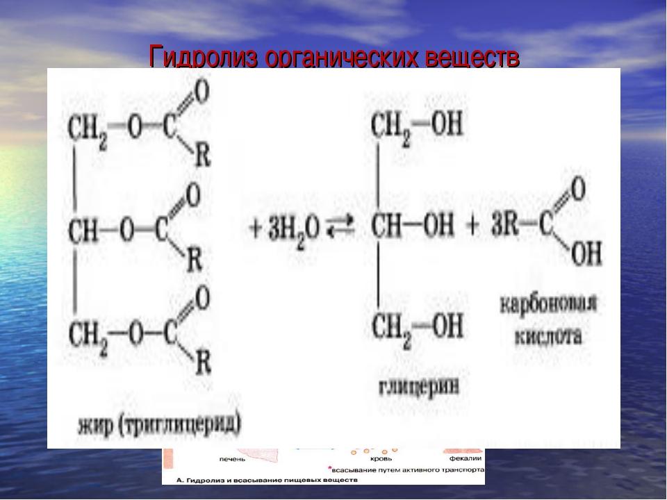 Гидролиз органических веществ