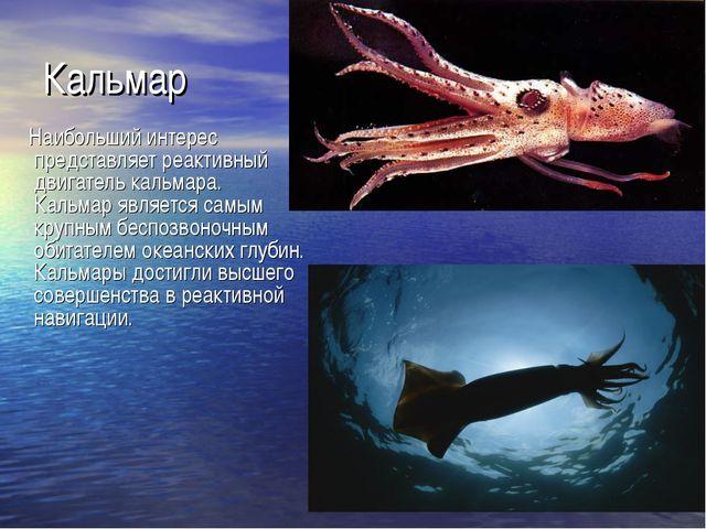 Кальмар Наибольший интерес представляет реактивный двигатель кальмара. Кальма...