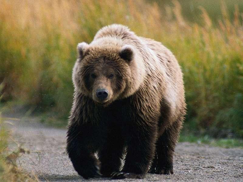 C:\Users\Маруся\Desktop\медведь.jpg