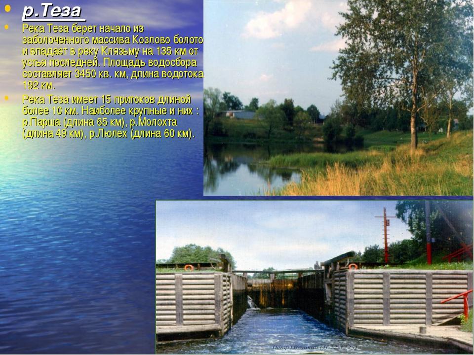 р.Теза Река Теза берет начало из заболоченного массива Козлово болото и впада...
