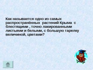 Как называется одно из самых распространённых растений Крыма с блестящими , т