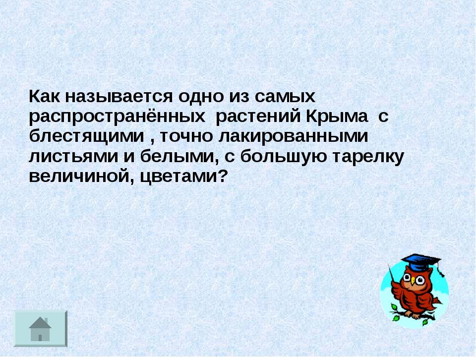 Как называлась одна из самых распространенных игрушек - Ubolussur.ru