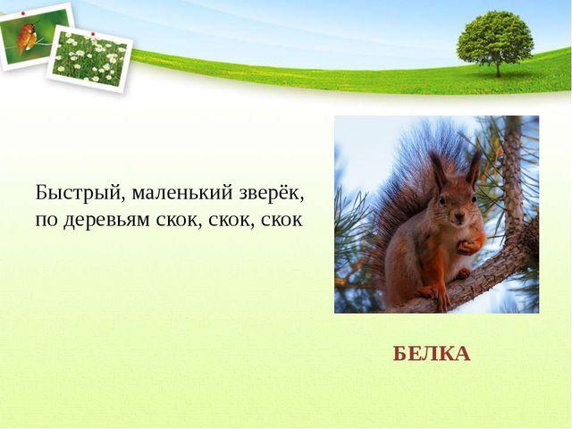 Быстрый, маленький зверёк, по деревьям скок, скок, скок БЕЛКА
