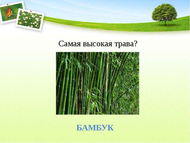 Самая высокая трава? БАМБУК