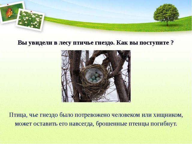 Вы увидели в лесу птичье гнездо. Как вы поступите ? Птица, чье гнездо было п...
