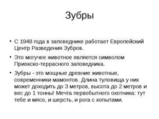 Зубры С 1948 года в заповеднике работает Европейский Центр Разведения Зубров.