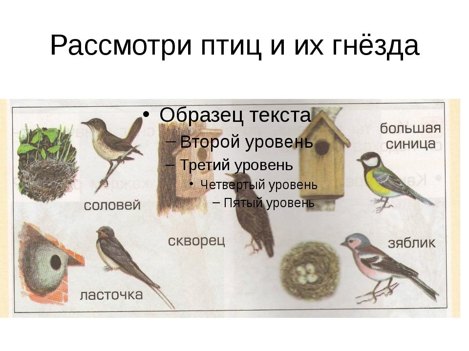 Рассмотри птиц и их гнёзда