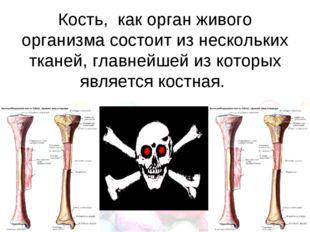 Кость, как орган живого организма состоит из нескольких тканей, главнейшей и