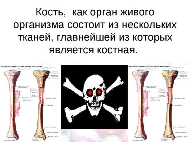 Кость, как орган живого организма состоит из нескольких тканей, главнейшей и...