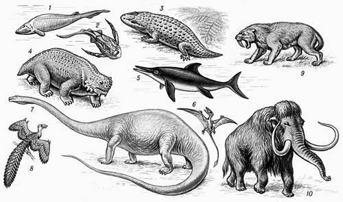 Рис. 2. Ископаемые позвоночные животные (реконструкция): 1 — гемицикласпис; 2 — ботриолепис; 3 — капитозавр; 4 — парейазавр; 5 — ихтиозавр; 6 — рамфоринх; 7 — диплодок; 8 — археоптерикс; 9 — саблезубый тигр; 10 — мамонт.