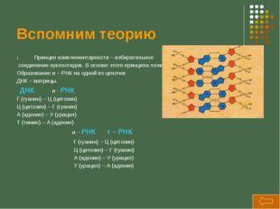 Вспомним теорию Принцип комплементарности – избирательное соединение нуклеоти