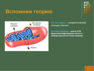 Вспомним теорию Митохондрии - «энергетические станции клетки» Основная функци