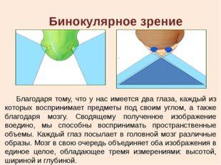 Бинокулярное зрение Благодаря тому, что у нас имеется два глаза, каждый из ко