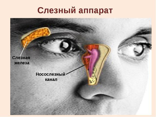 Факторы, способствующие сохранению зрения № Необходимыефакторы 1 Хорошее осве...