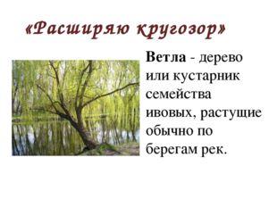 «Расширяю кругозор» Ветла - дерево или кустарник семейства ивовых, растущие о