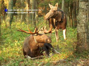 Стадо лосей из 12 голов весят 7,2 т. Какова масса одного лося?