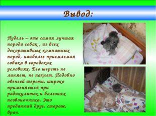 Вывод: Пудель – это самая лучшая порода собак , из всех декоративных комнатны