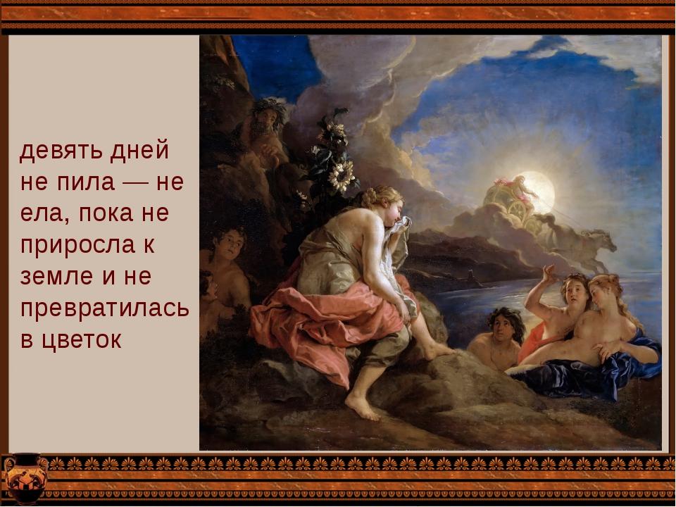 девять дней не пила — не ела, пока не приросла к земле и не превратилась в цв...