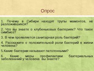 Опрос 1. Почему в Сибири находят трупы мамонтов, не разложившихся? 2. Что вы