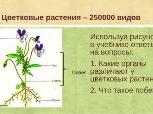 Цветковые растения – 250000 видов Используя рисунок 38 в учебнике ответьте на