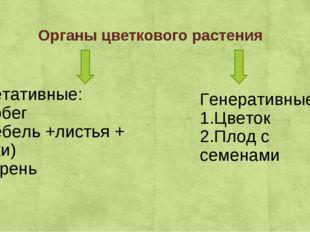 Органы цветкового растения Вегетативные: 1.Побег ( стебель +листья + почки) 2